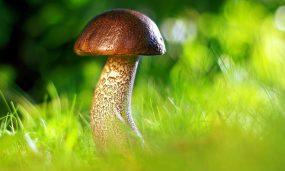 mushroom-3587888_1920.jpg